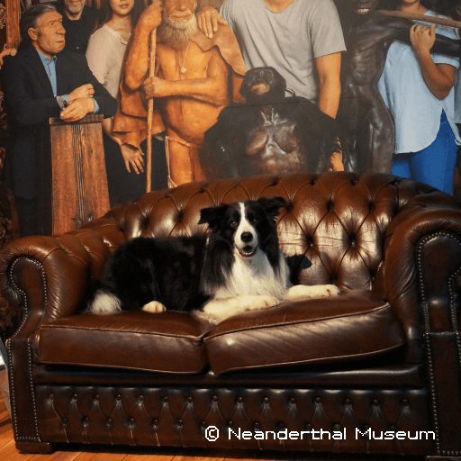 Neanderthalmuseum Doggy Tour